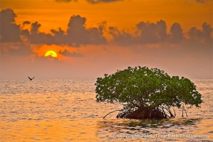 Saddle Caye South - Discover the Trees in the Sea
